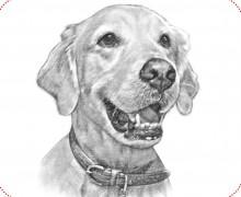 Yo voy a dibujar un retrato digital de tu mascota