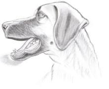 Yo voy a dibujar una caricatura  para usted
