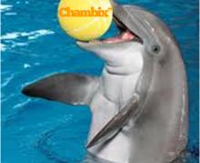 Yo voy a poner su texto o logotipo en una bola en el hocico del delfín